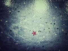 Sterne finden (***toile filante***) Tags: star stern red rot details poetic poetisch