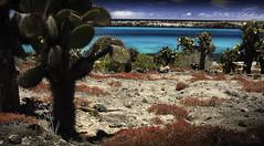 Paradise Island (Luis Alcivar // www.sanjorgeecolodges.com) Tags: paradise island ecuador south america galapagos islands wildlife photography landscape workshop tours trips best luis alcivar