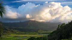 Kauai (Visty120@gmail.com) Tags: fujifilm gear hawaii kauai nature places x100 princeville unitedstates us