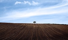 Lines..... (klythawk) Tags: lonelytree ploughedfield lines hedge bluesky clouds spring nature blue brown black white olympus em1 omd 1240mm a614 nottinghamshire klythawk
