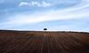 Lines..... (klythawk) Tags: lonelytree ploughedfield lines hedge bluesky clouds spring nature blue brown black white olympus em1 omd 1240mm a614 nottinghamshire klythawk