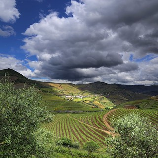 Port producer Sandeman surrounded by terraced vineyards