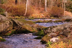 River with autumn-colors. (irio.jyske) Tags: colors autumn river flow trees stones canon sigma nice