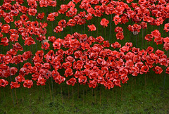 Poppies at the Tower (Andy Sedg) Tags: red london remember poppies rememberance tribute toweroflondon