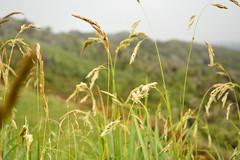 Muelle de las Almas 061 (f3nc0r3) Tags: sea verde green landscape muelle mar flora nikon paisaje almas chiloe d5200