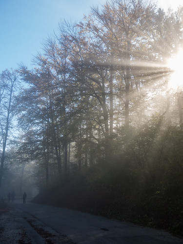 Sun rays through trees and fog