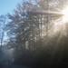 Sun rays through trees and fog