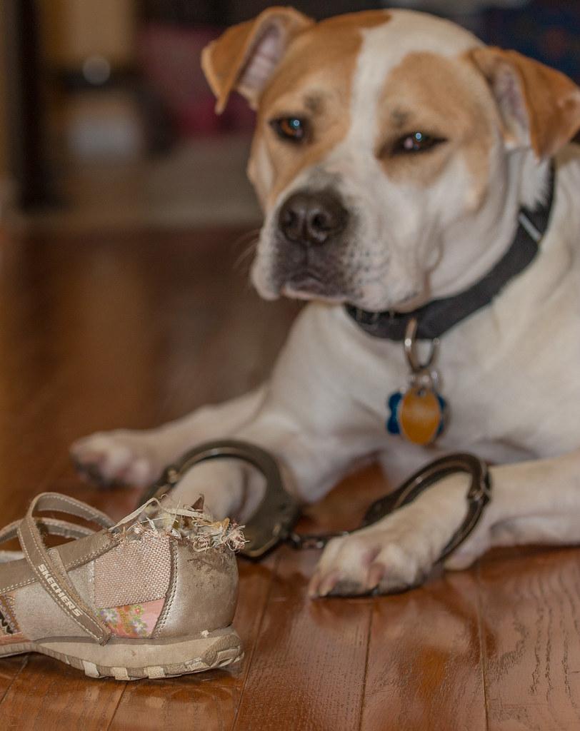 Pitbull Shoe Size