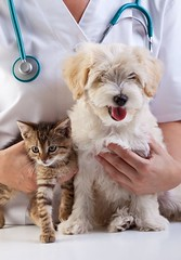 veterinary clinic,dog and cat, caucasian, check, checkup, clinic, doctor, dog, equipment, examination, examining, hand, health, healthcare, healthy, hold, holding, kitten, kitty, love, medical, medicine, nurse, occupation, people, pe (www.ilmicrofono.it) Tags: dog pet cute girl animal female computer labrador adult little background internet lifestyle canine application health doctor latin drugs hispanic care veterinaryclinic doc exam isolated app latinamerican examining consultation petclinic