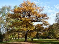 Der Baum, mein Freund (ustrassmann) Tags: pferde bume baum erft erftkreis schlossloersfeld