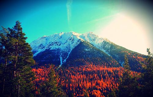 Hello Snow! _ Autumnal Gift #3