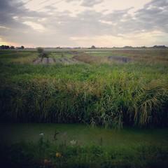 Les herbes de la Haute Planche