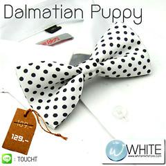 Dalmatian Puppy - หูกระต่าย สีขาว ลายจุดดำ เล็ก