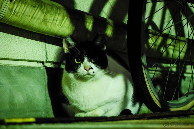 Today's Cat@2014-12-04