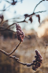 DSC_3326 (Daniel Gpfert) Tags: morning winter light sun cold ice december colours bokeh