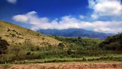 Bucolic Landscapes (Rodrigo Neves) Tags: green grass mobile landscape cows farm cellphone cellular hills motorola motog