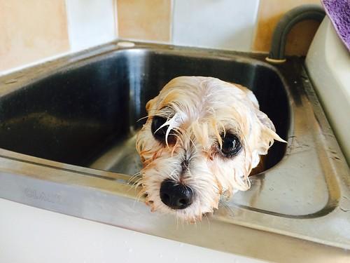 bath time :-(