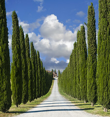 Zypressen-Allee in der Toskana (Nikonist65) Tags: italien italy house nature way landscape europa europe path natur haus lane tuscany landschaft cypresses feldweg weg toskana zypressen zypressenallee alleyofcypresses alamedaofcypresses
