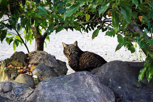 Today's Cat@2015-01-18