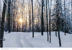 Icestorm in Quebec, Canada (Vincent Demers - vincentphoto.com) Tags: voyage travel winter canada cold ice quebec hiver freezing freeze icestorm verglas froid estrie easterntownships travelphotography traveldestination frigide travellocations quebeceasterntownships