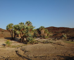 Kenia. Loyangalani. Pequeo oasis (escandio) Tags: kenia 2014 loyangalani viajealturkana