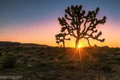 California Sunset (Bryan_Xavier) Tags: california sunset u2 rocks desert joshuatree joshuatreenationalpark