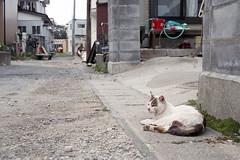 20160424-27 (GenJapan1986) Tags: film animal japan cat island  miyagi   2016     nikonnewfm2   fujifilmfujicolorsuperiapremium400  sabusawajima