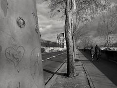 Les arbres aiment ils le romantisme ? Do trees like romantism? (alainpere407) Tags: paris blackdiamond platane streetsofparis parisnoiretblanc romanticparis alainpere parisborddeseine candidpictureinparis