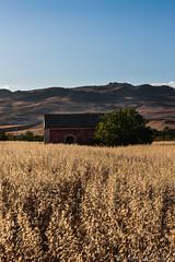 (Michele Montleone) Tags: old sunset italy landscape sicily sicilia paesaggio grano