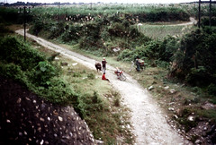 32-130 (ndpa / s. lundeen, archivist) Tags: road winter people color fall film animal bike bicycle rural 35mm countryside village nick taiwan bikes ox bicycles dirtroad 1970s 1972 hualien 32 taiwanese eastcoast dewolf rurallife aboardatrain travelingbytrain republicofchina onatrain easterncoast viewfromatrain easterntaiwan nickdewolf photographbynickdewolf hualiencounty ridingonatrain reel32 viewfromapassingtrain takenfromaboardapassingtrain