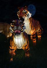 _DSC9486_2 (Elii D.) Tags: light fish flower animal night zoo monkey neon dragons lantern lampion dargon