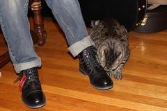 (spotboslow) Tags: cat luciano watertown massachusetts