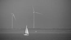 Traditional and Modern usage of Wind energy (jmwill2005) Tags: holland meer wind zeeland schelde schwarzweiss windrad nordsee segeln segelboot niederlande küste ebbe windräder windkraft flut gezeiten