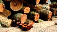 Aqueles que Nascem da Morte_GabrielaSMller (Gabi-nete da Silveira Mller) Tags: wood naturaleza nature mushrooms madera natureza natur cogumelo holz madeira hongo toras polz