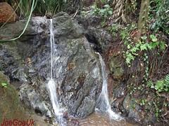 Curca Spring  2 (joegoauk73) Tags: goa zor joegoauk curca