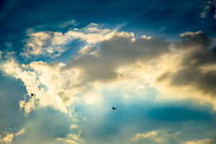 Can't Take the Sky's From Me (GlennPope) Tags: sunset sky cloud bird nature weather animal austin outdoors us flying texas unitedstates dusk