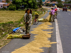 On the job # Vietnam # PICT0984 # KonicaMinolta Dimage G600 - 2005 (irisisopen f/8light) Tags: color digital minolta konica farbe dimage g600 irisisopen