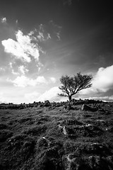 365A5094 (Nazgul 9) Tags: winter bw white black tree wales landscape south scene brecon beacons