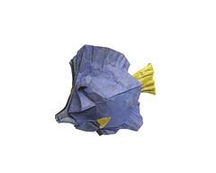 Purple Tang (folding~well) Tags: fish yellow paper origami purple folding tang