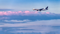 ANA Boeing 777-200 JA711A   Tokyo - Haneda Intl Airport (HND / RJTT) (blackqualis) Tags: 1dx eos1dx 150600mmsportss014 sigma150600mmf563sportss014 rjtt b777 b777200 34l ja711a