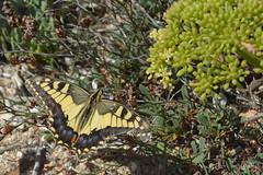 Cap de Ses Salines, Mallorca. Set15 (Virginia Gin) Tags: nikon mallorca illesbalears capdesessalines set15