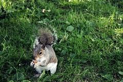 IMG_1148 (YoSoyEntropia) Tags: england wales squirrel cardiff gales eat ardilla comiendo