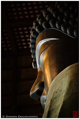 More  (Damien Douxchamps) Tags: japan temple great   nara buddah kansai japon todaiji    narapark   toudaiji kinki