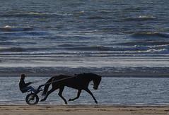 Belgian coast (Natali Antonovich) Tags: belgiancoast wenduine northsea sea nature water horse horsemen animal lifestyle portrait relaxation flight seasideresort seashore seaboard seaside beach