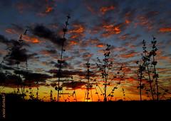Quarta-sunset (sonia furtado) Tags: quartasunset sunset pds souza paraíba pb ne brasil brazil soniafurtado contraluz nanaturezainnature