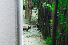 Today's Cat@2016-09-14 (masatsu) Tags: cat thebiggestgroupwithonlycats catspotting pentax mx1