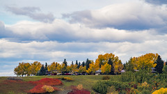 Fall Foliage (ken.sparks33) Tags: fall autumn calgary parkland alberta colours trees canada