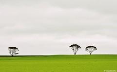 Yorke Peninsula (Sougata2013) Tags: southaustralia australia yorkepeninsula landscape trees treeart nikond7200 countryside adelaide
