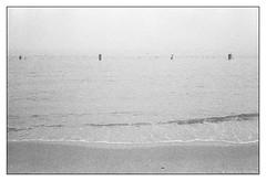 foggy morning  #010 (lynnb's snaps) Tags: 2016 35mm fomadonlqn iso800 kodak manly r35s rollei35s tmax3200 bw film fog harbour sydney zeisssonnar40mmf28 40mm zeiss40mmf28sonnar analogphotography v700 blackandwhite blackwhite bianconero noiretblanc monochrome schwarzweis biancoenero 黒と白 bianconegro analogue analog lynnburdekinphotography 35mmfilm