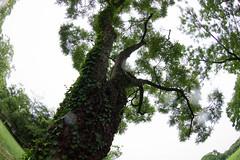 Bampaku Park in the rain (nak.viognier) Tags: bampakupark raining osaka  olympusepl3 lumixgfisheye8mmf35